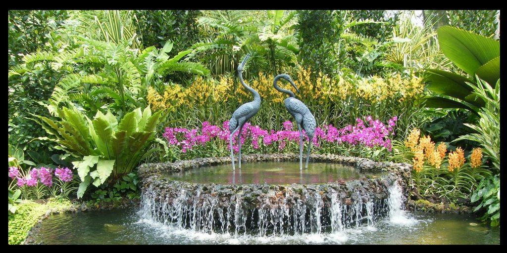Two beautiful gardens – Singapore and Kirstenbosch Botanical gardens