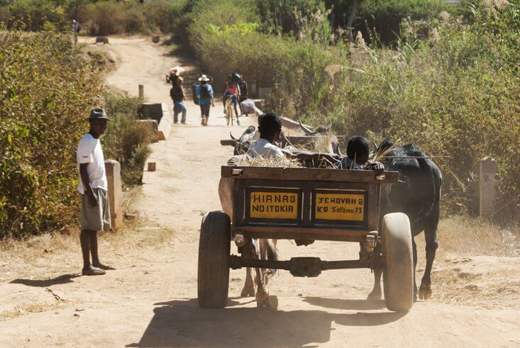 Cart pulled by Oxen in Madagascar