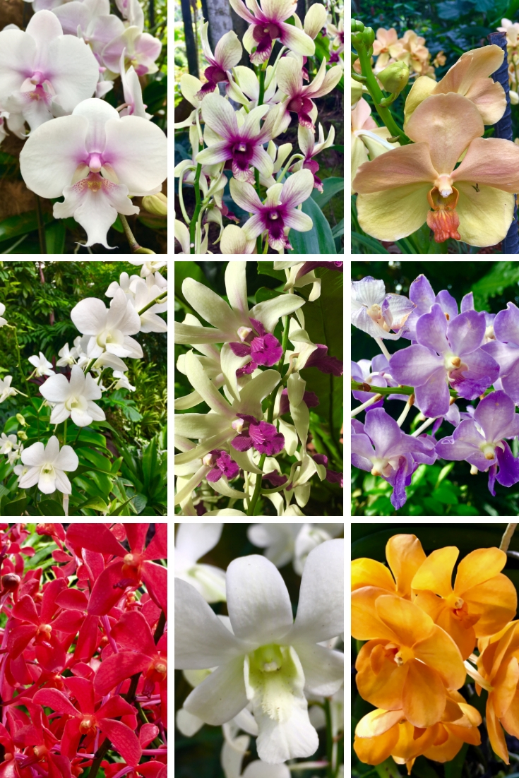 a selection of orchids