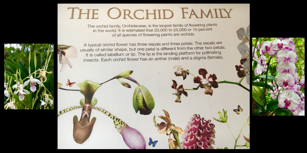 the orchid family