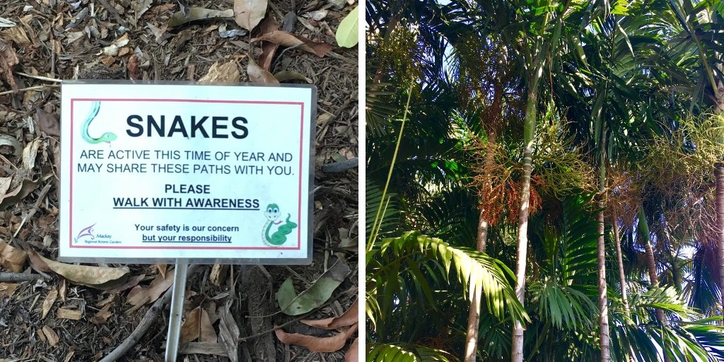Sign for snakes at Mackay Botanical Gardens Queensland Australia