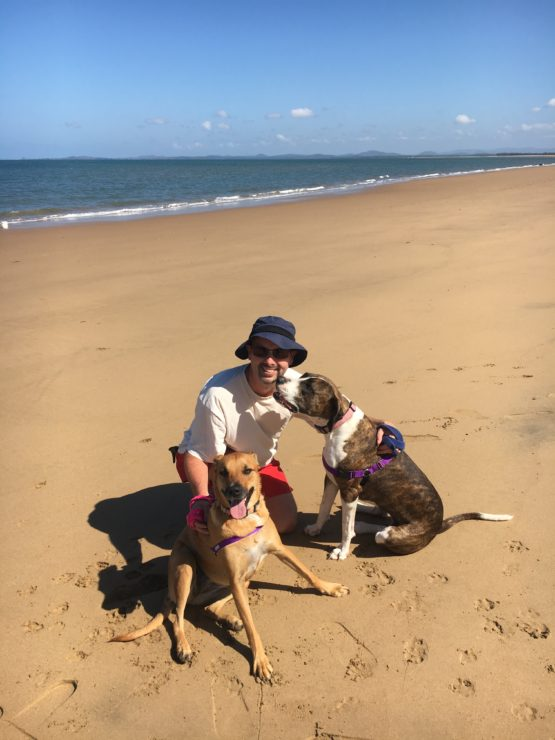 Dogs on the beach - 5 reasons house sitting is a great way to see the world