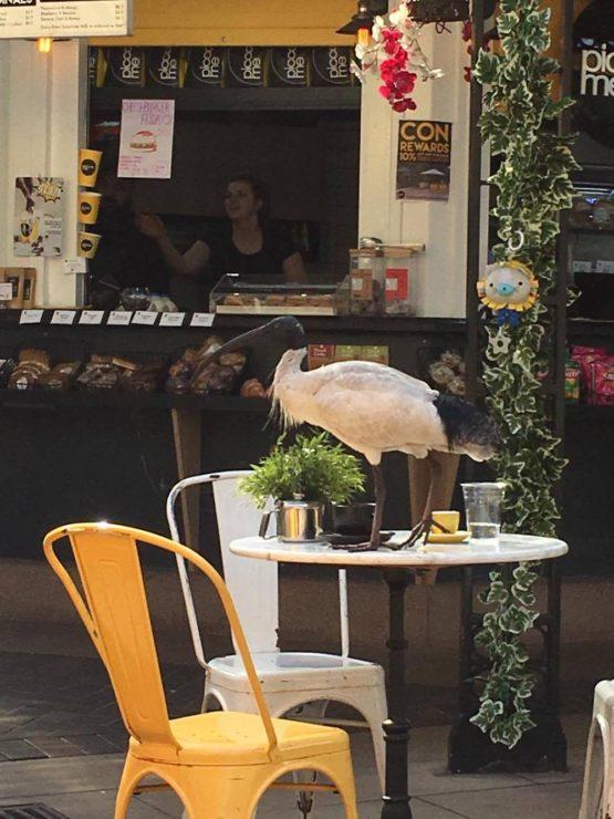 bin chicken - Ibis - my expat diary
