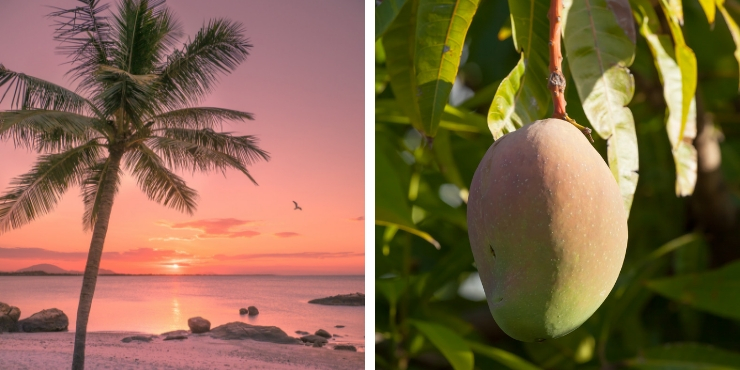 mango and sunset in Bowen Australia