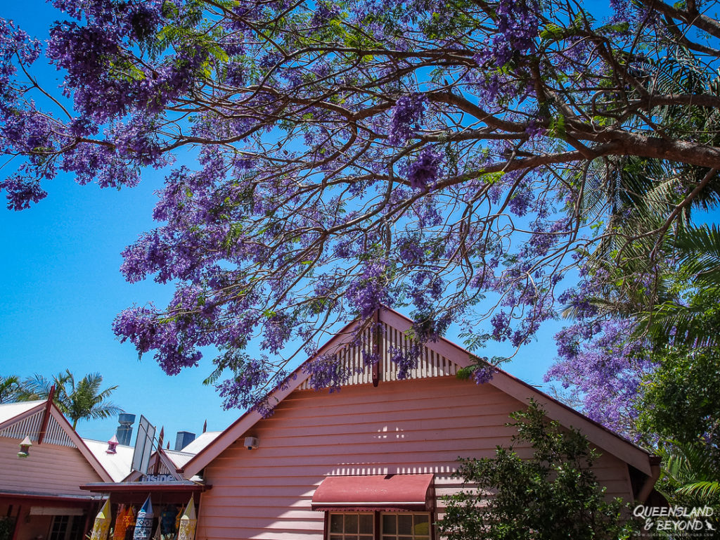   The Best Things to Do in Queensland Australia featured by top international travel blogger, Tracy's Travels in Time: Sunshine Coast Hinterland