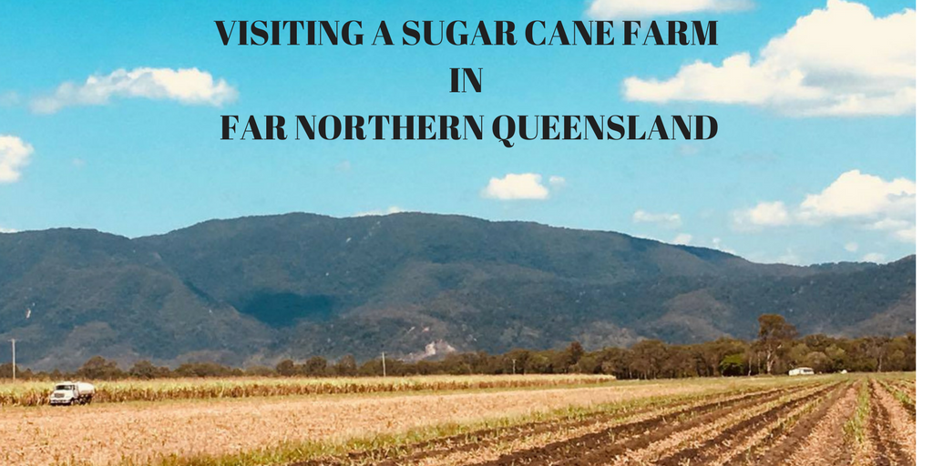 A photograph of sugar cane fields in Northern Queensland