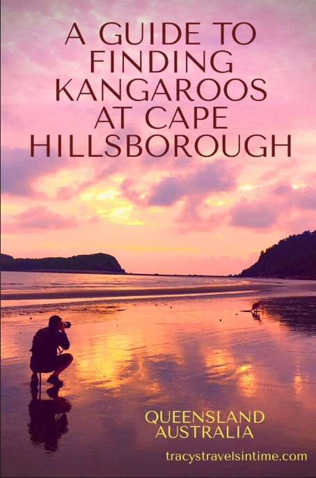 A photograph of a man with a camera taking a picture of a kangaroo on a beach at sunrise at Cape Hillsborough in Queensland