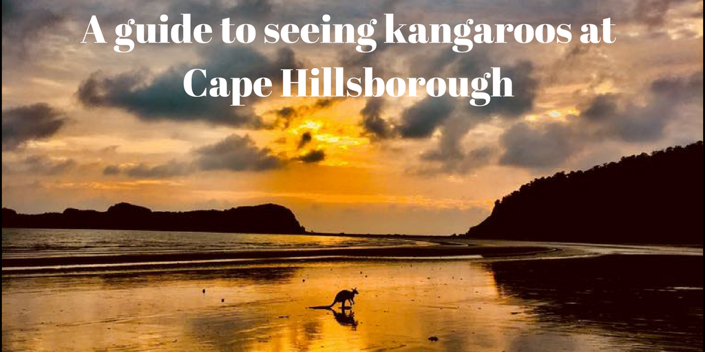 A photograph of a kangaroo on a beach at sunrise in Australia
