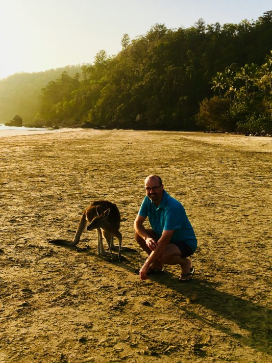 A kangaroo on Cape Hillsborough Beach at dawn