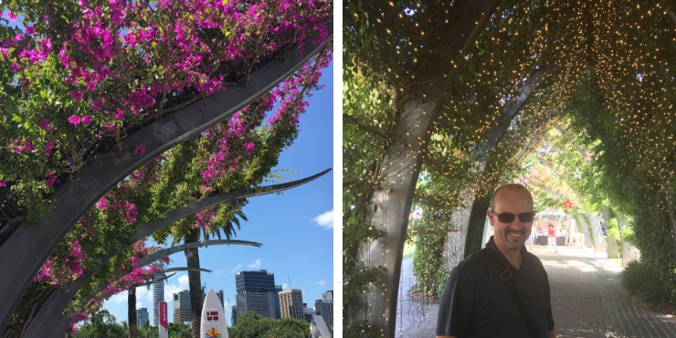 South Bank bougainvillea