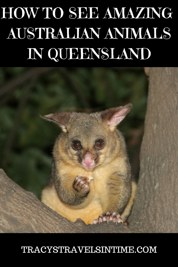 a guide to australian animals