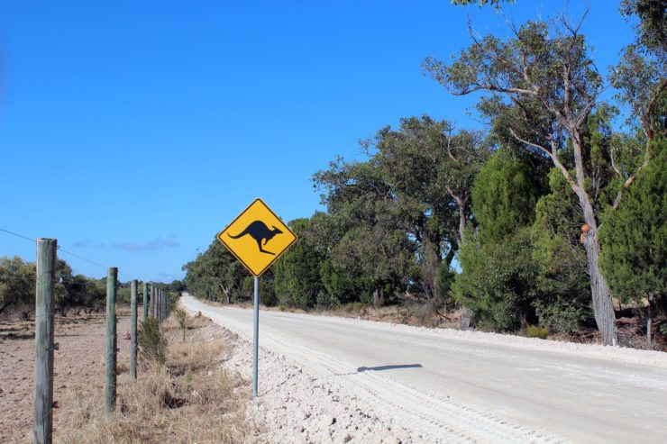 driving in australia A KANGAROO SIGN