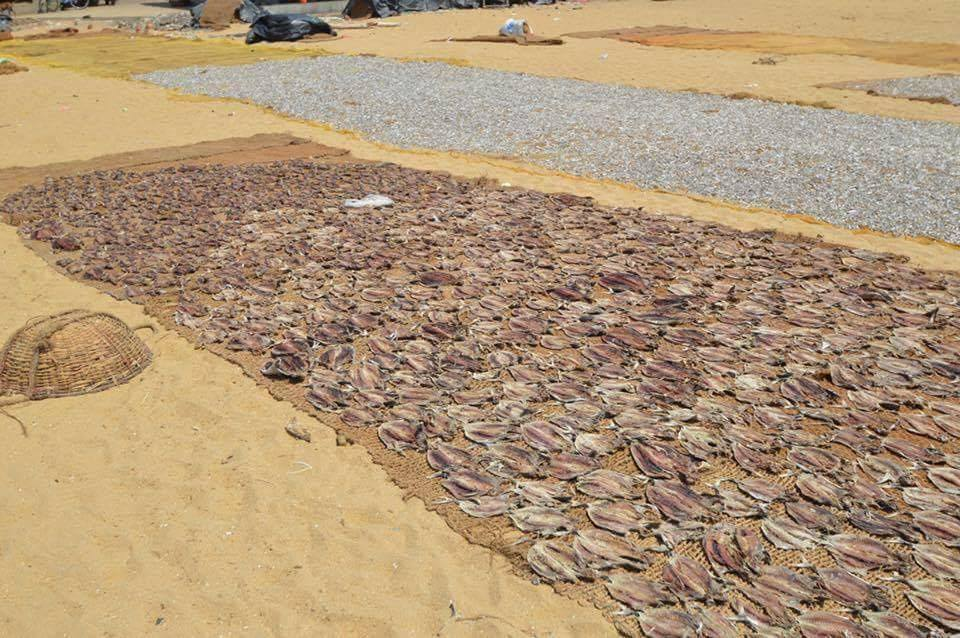 fish-laid-out-to-dry