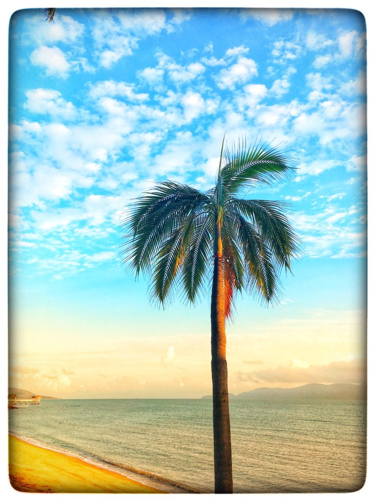 A palm tree on the Strand in Townsville