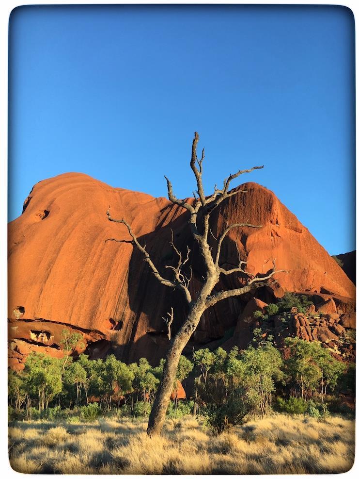 Uluru with tree