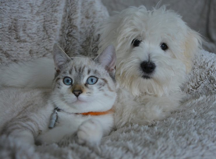 cat and dog CUDDLING | 15 Things to Know Before Moving to Australia featured by top international travel blog, Tracy's Travels in Time