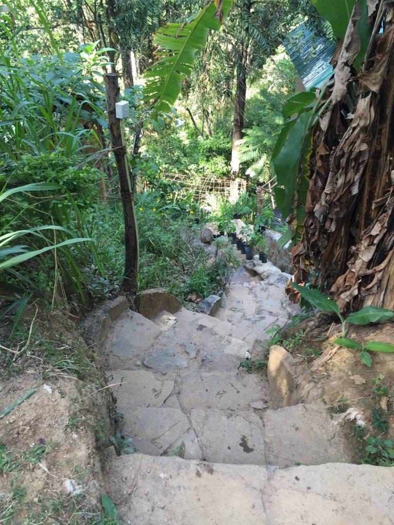 path-to-the-lodge-aribnb-srilanka