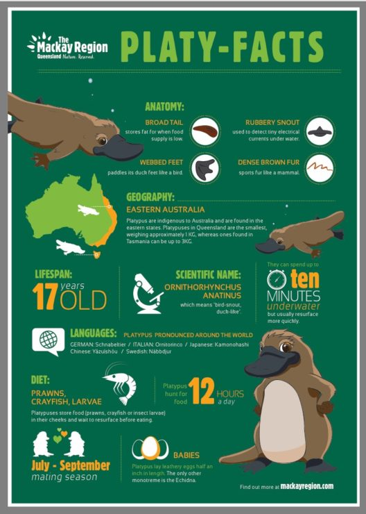 Platypus facts.