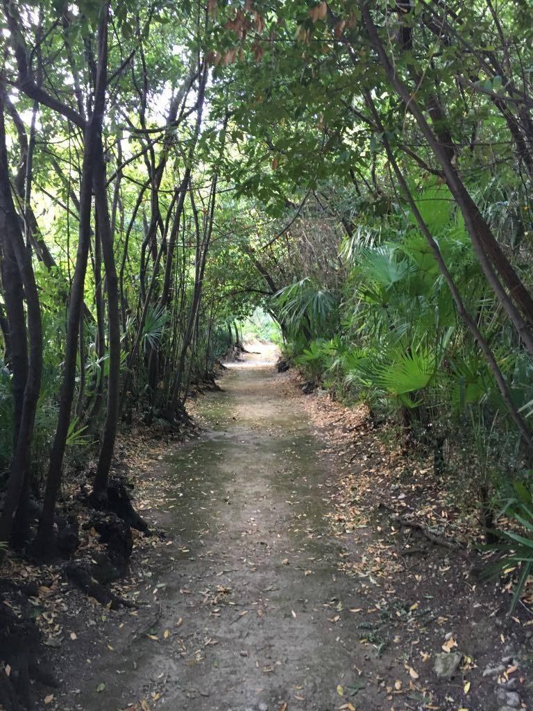 Shaded walks at the arboretum trsteno