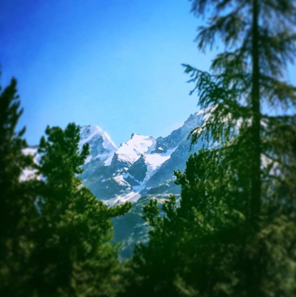 trees from the bernina express | A Trip on the Bernina Express featured by top internation travel blog, Tracy's Travels in Time