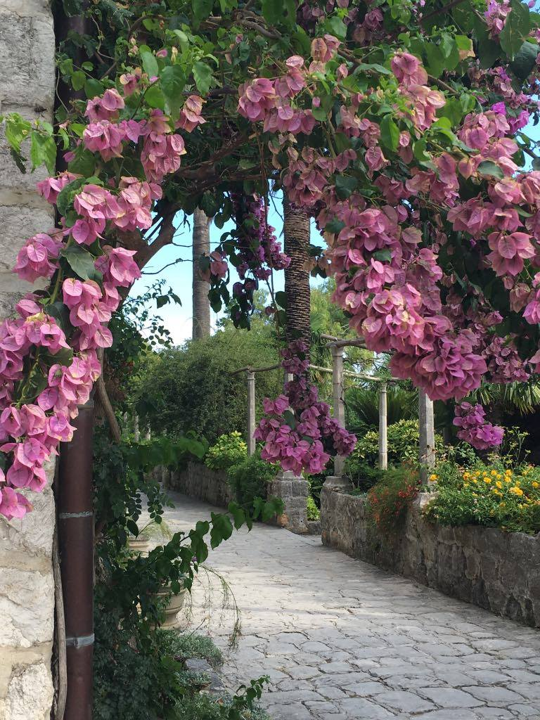 the bougainvillea was stunning