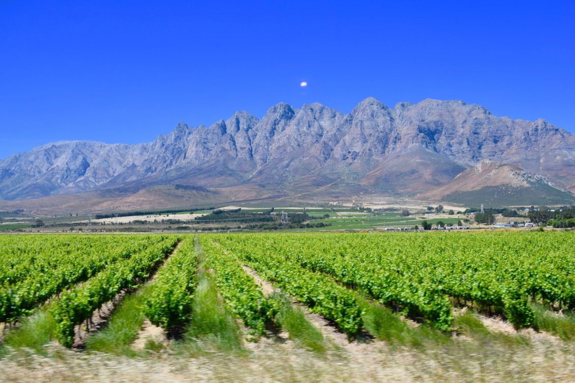 WINERIES IN THE CAPE SOUTH AFRICA - VINEYARDS