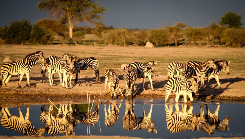 Botswana - zebras at waterhole