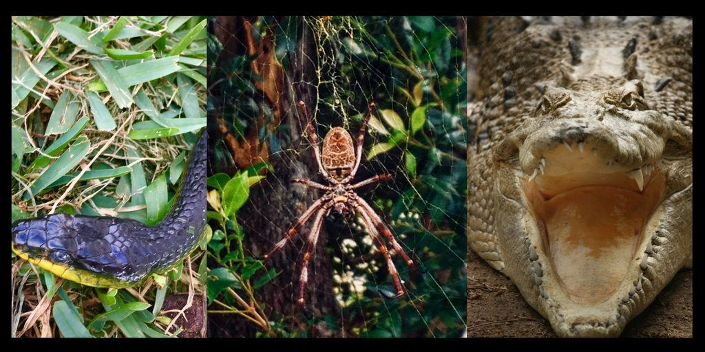 scary animals in Australia include snakes spiders and crocs