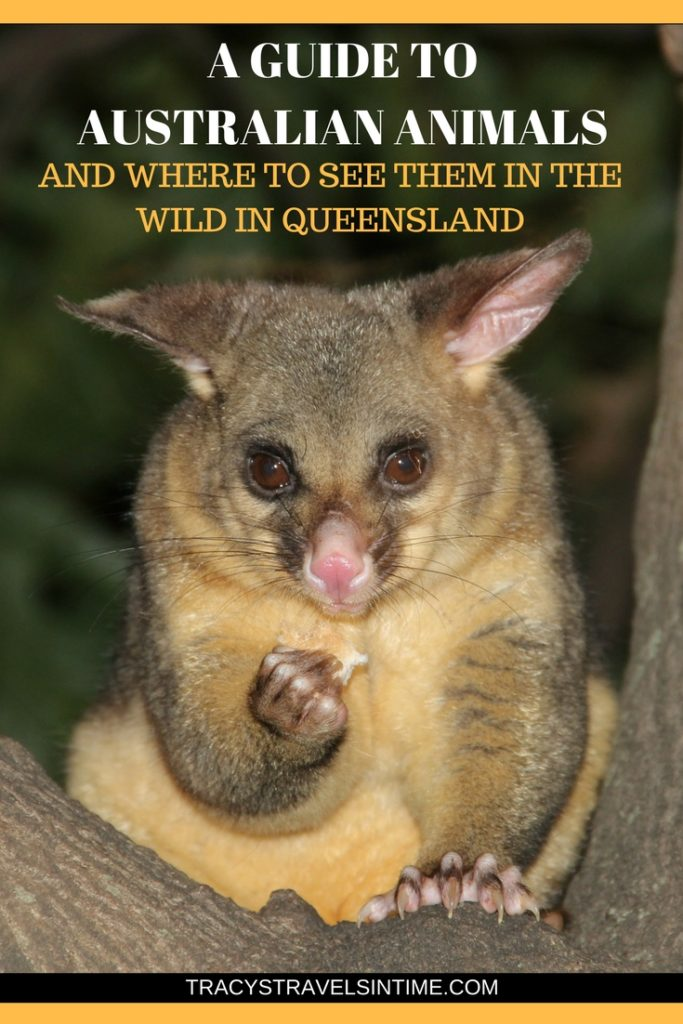 a guide to native australian species