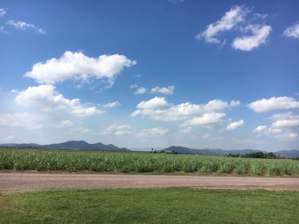 sugar cane fiels in queensland