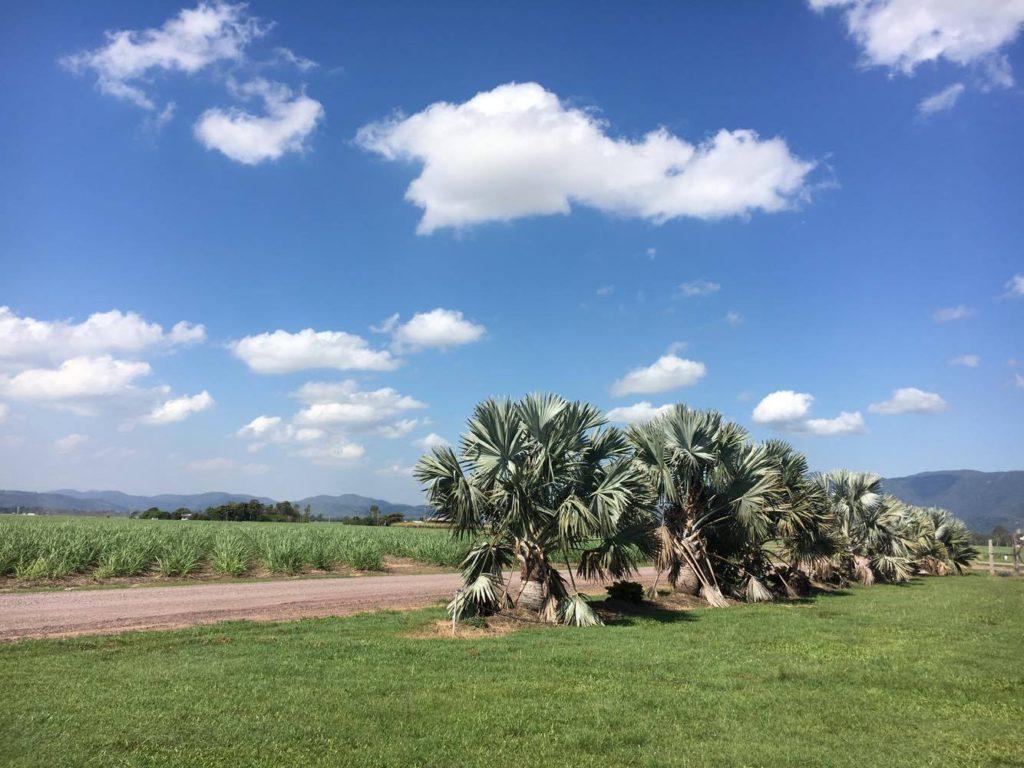 beautiful cane farm