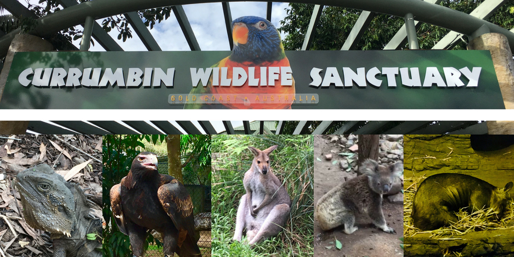 Currumbin animal sanctuary - expat life in Brisbane