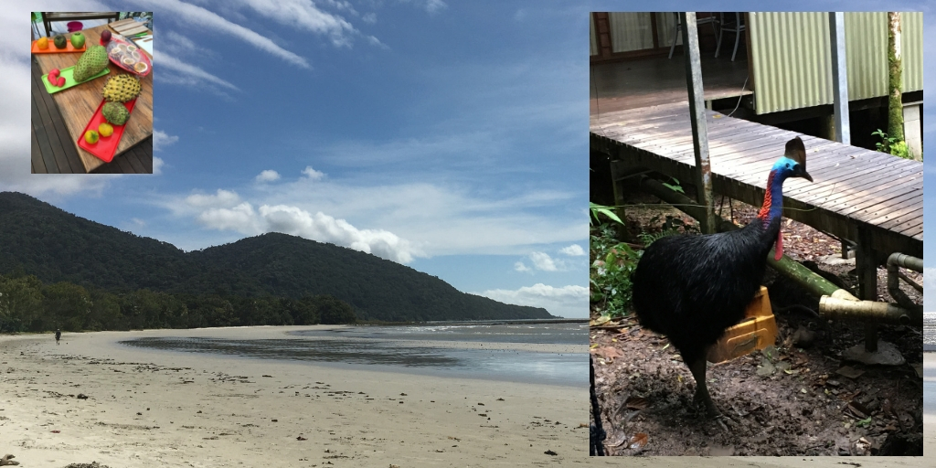 Cape Tribulation, fruit platters and a cassowary