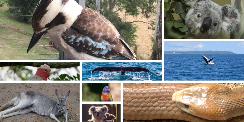 Australian Animals Archives | Tracy's Travels in Time