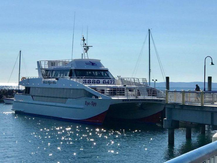 MV Eye Spy whale watching boat