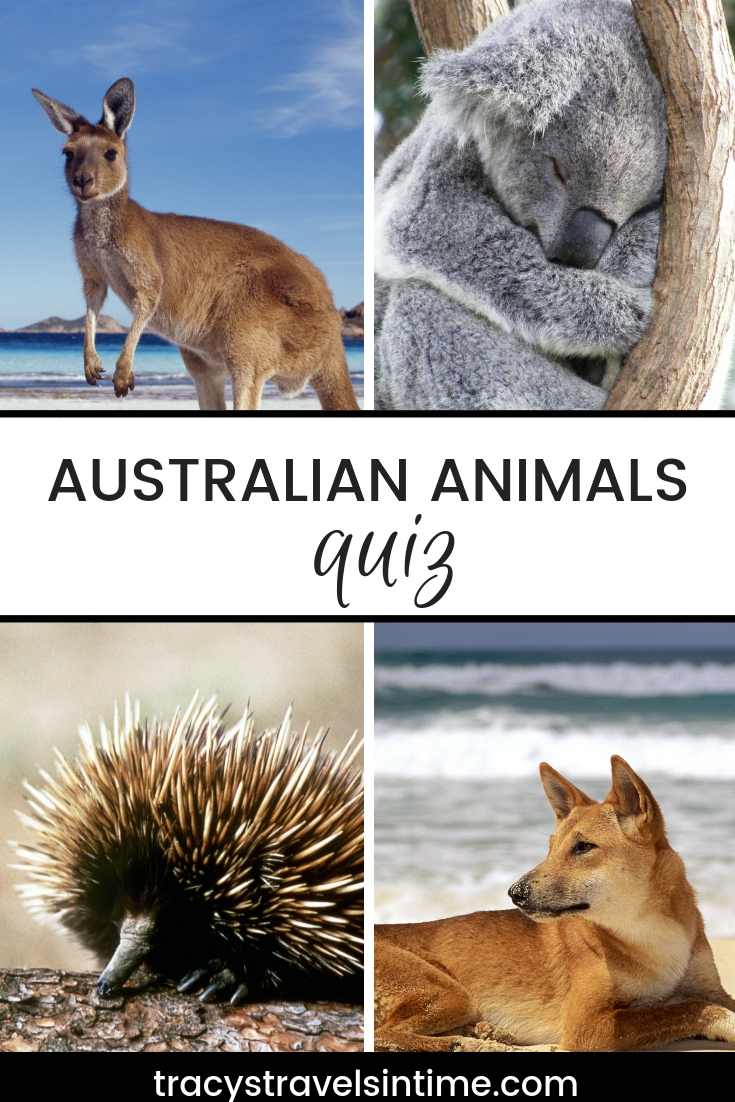 Australian animals quiz | Tracy's Travels in Time