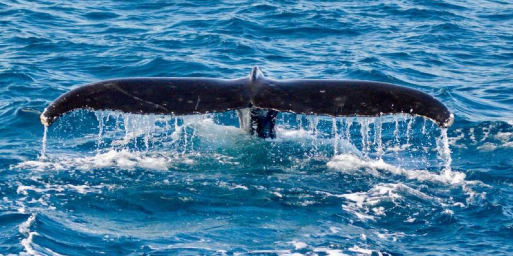 An unforgettable day with Brisbane Whale Watching