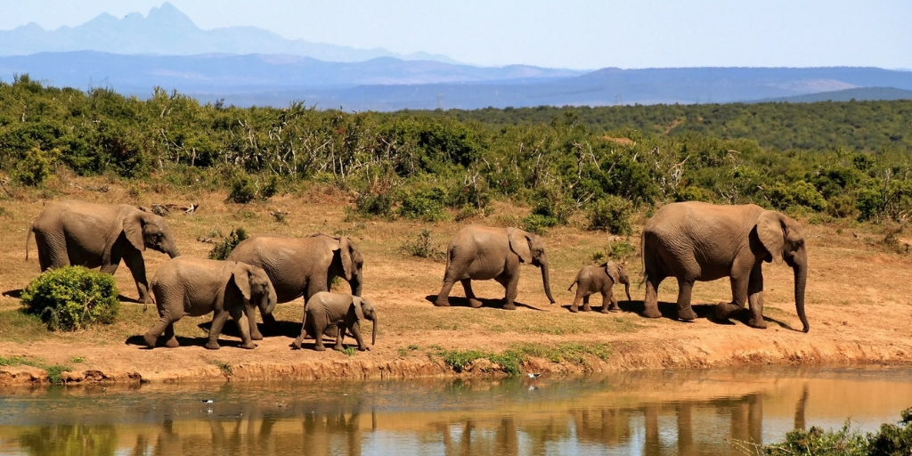 A HERD OF ELEPHANTS BESIDE A WATERHOLE IN SOUTH AFRICA
