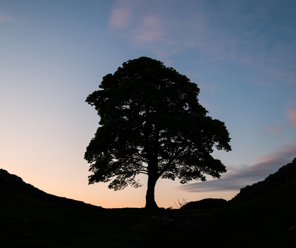 NORTHUMBERLAND NATIONAL PARK SYCAMORE GAP