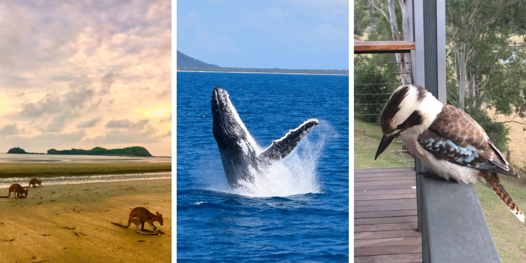 kangaroos, a humpback whale and a kookaburra