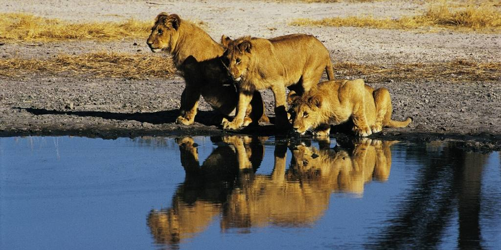 An African Safari in Botswana – What is it really like?