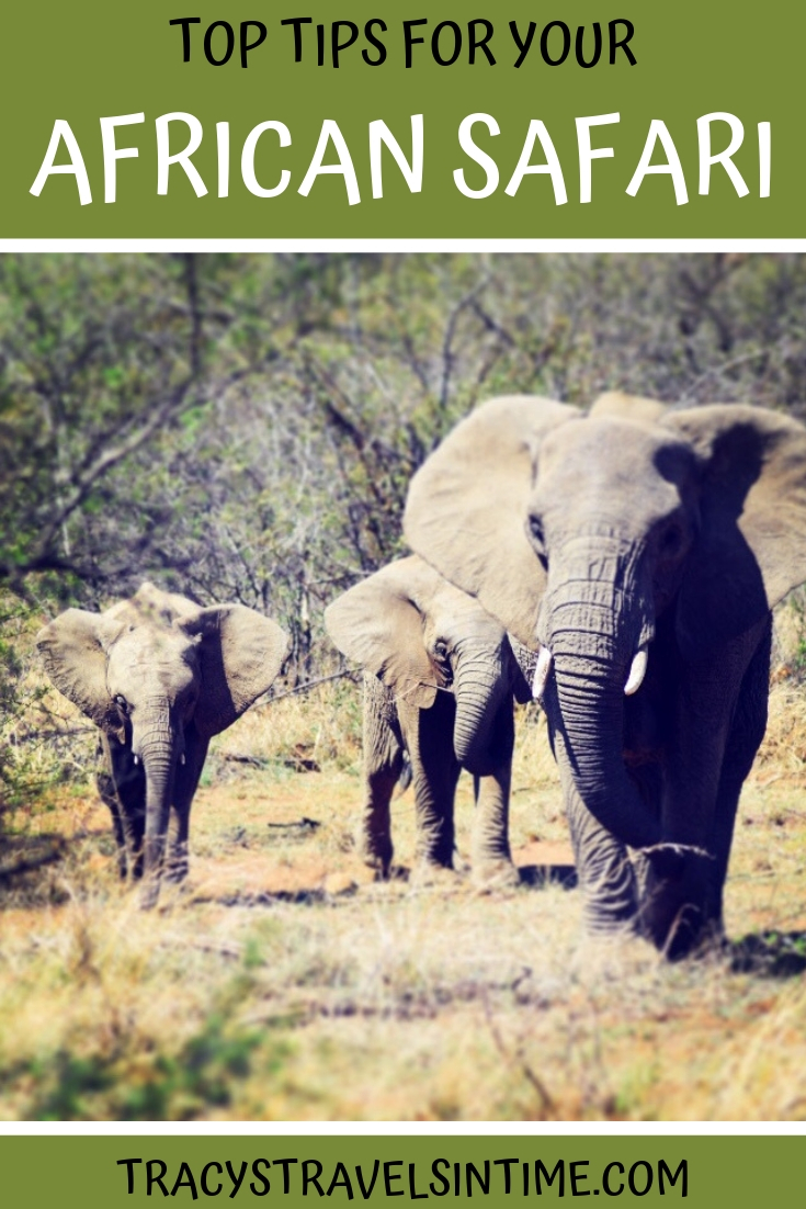 Top safari tips - everything you need to know for your African safari