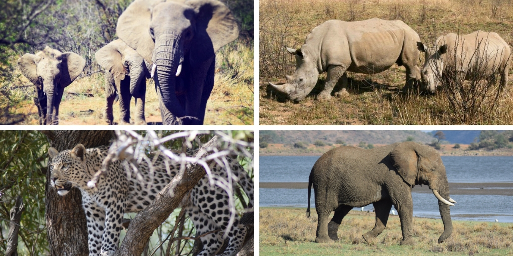Top safari tips – everything you need to know to prepare for an African safari