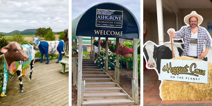 Ashgrove Cheese Farm tasmania