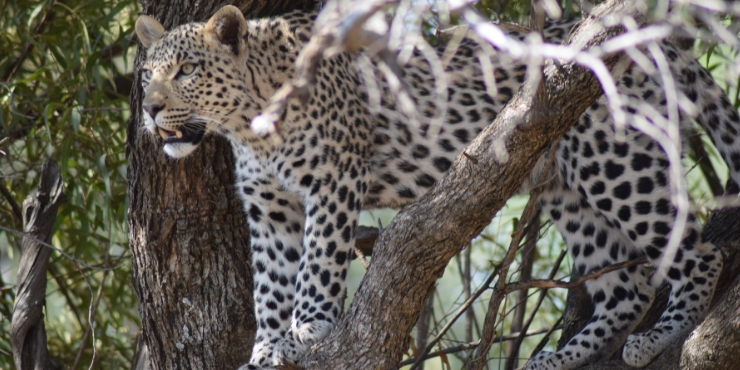 Top safari tips - everything you need to know for your