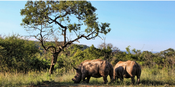 rhino in africa - What to wear on safari in South Africa