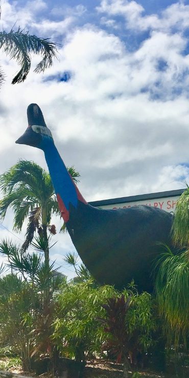 Big cassowary sculpture in Mission Beach - Australia's Big Things