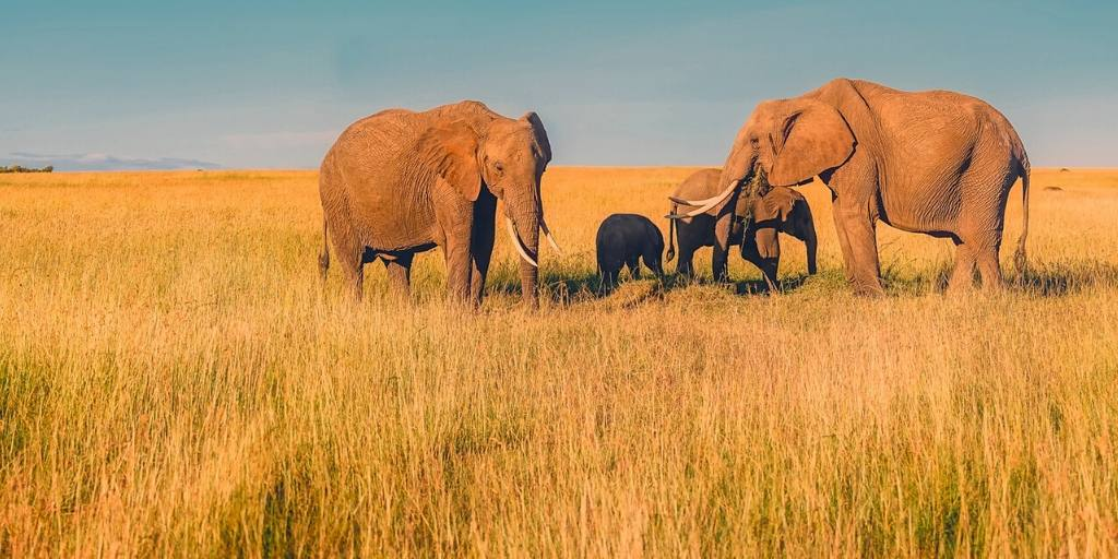 What to wear on safari in South Africa – a complete packing guide.