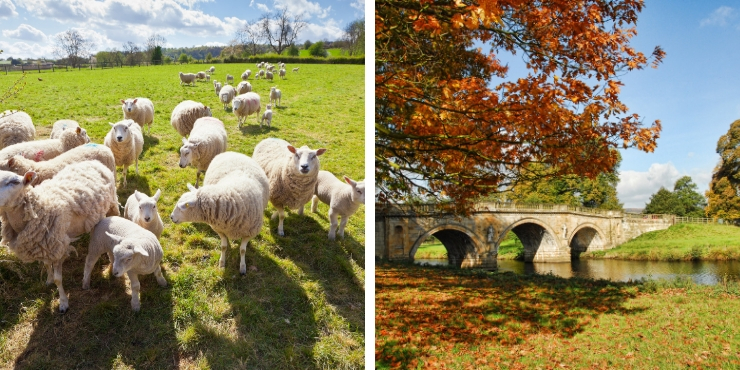 A picture of lambs in a field and a picture of autumn foliage in the UK