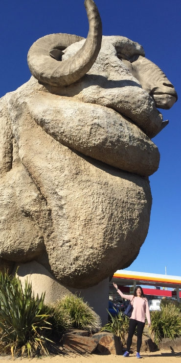 THE BIG MERINO in Australia
